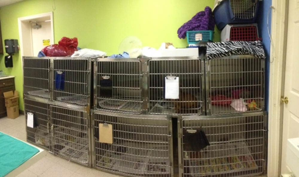 Treatment Area At Northwest Rankin Animal Clinic In Flowood