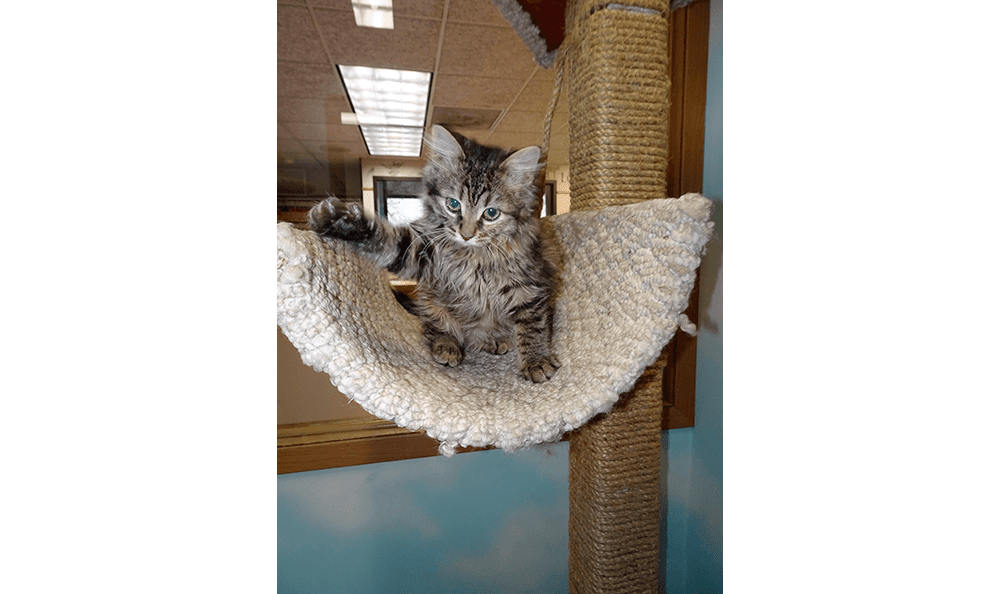 Kitten in the office at Sandwich Veterinary Hospital