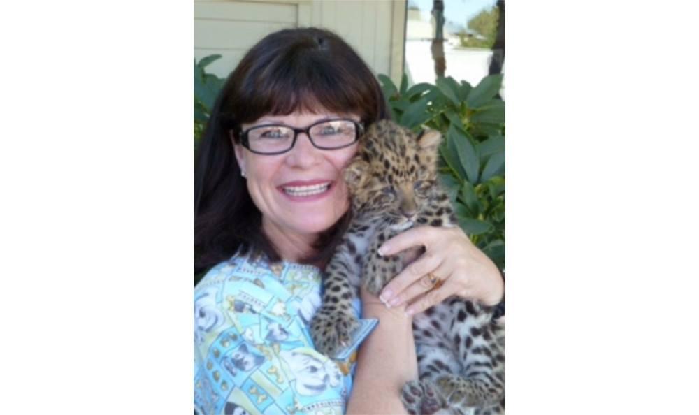 Team member with a baby cheetah at Santa Clara Animal Hospital