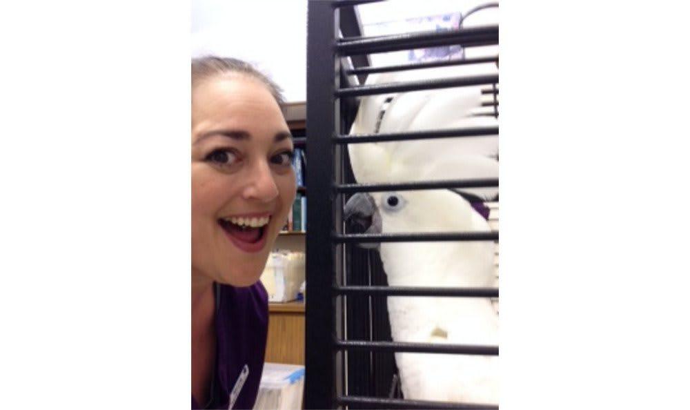 One of the many birds treated at Santa Clara Animal Hospital