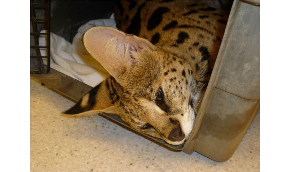 A sleepy friend at Santa Clara Animal Hospital