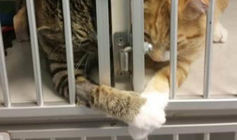 Kittens Touching Paws At Larkin Veterinary Center
