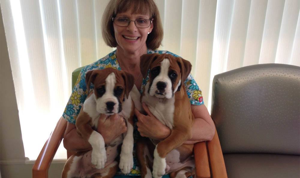 Nurse Holding Puppies At Larkin Veterinary Center In West Lawn