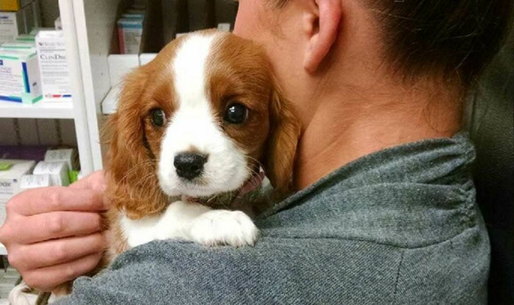 Puppy On Shoulder At Larkin Veterinary Center In West Lawn