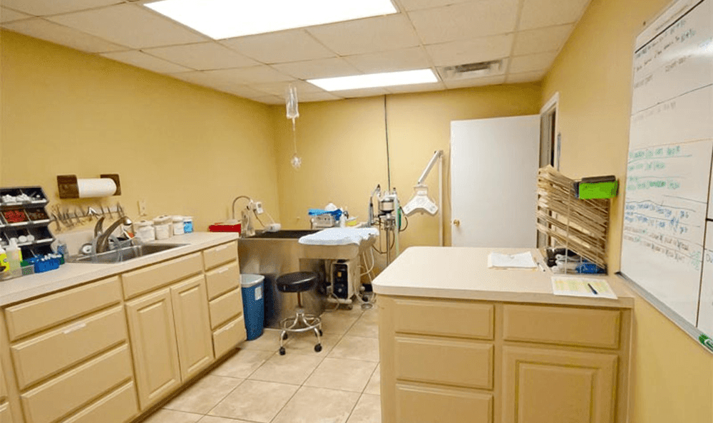 Large Surgery Room At Longwood Animal Hospital and Pet Resort