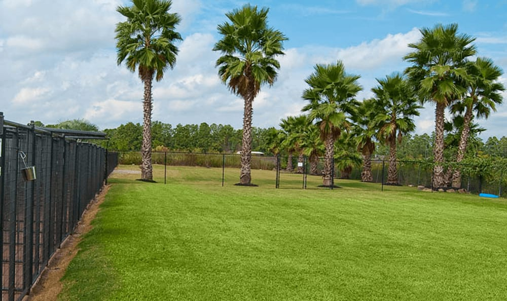 Outdoor Dog Run At Longwood Animal Hospital and Pet Resort In Cypress