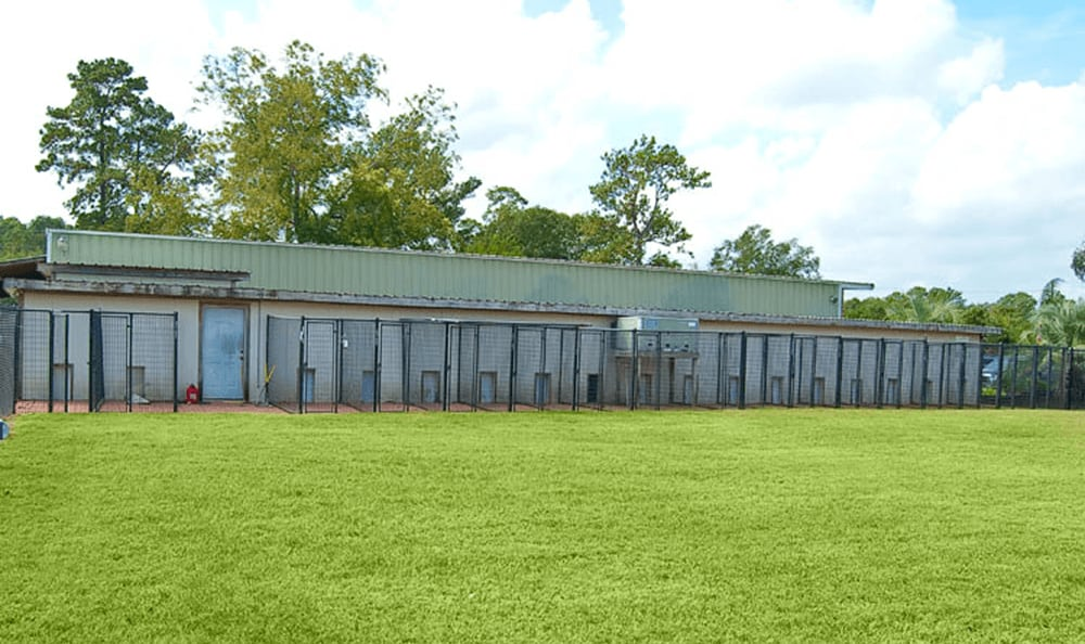 Outdoor Kennels And Play Area At Longwood Animal Hospital and Pet Resort