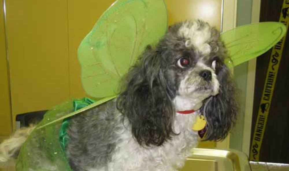 Baylin With Wings At Friendswood Animal Clinic In Friendswood