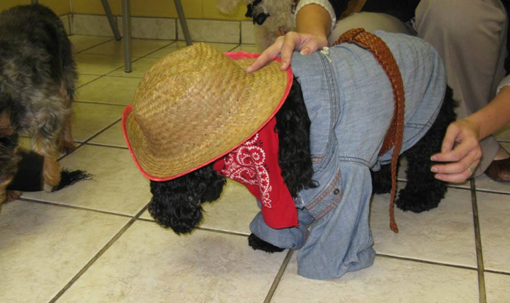 Cowboy Dog At Friendswood Animal Clinic In Friendswood