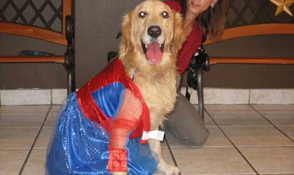 Dog Dressed Up As Spider Woman At Friendswood Animal Clinic