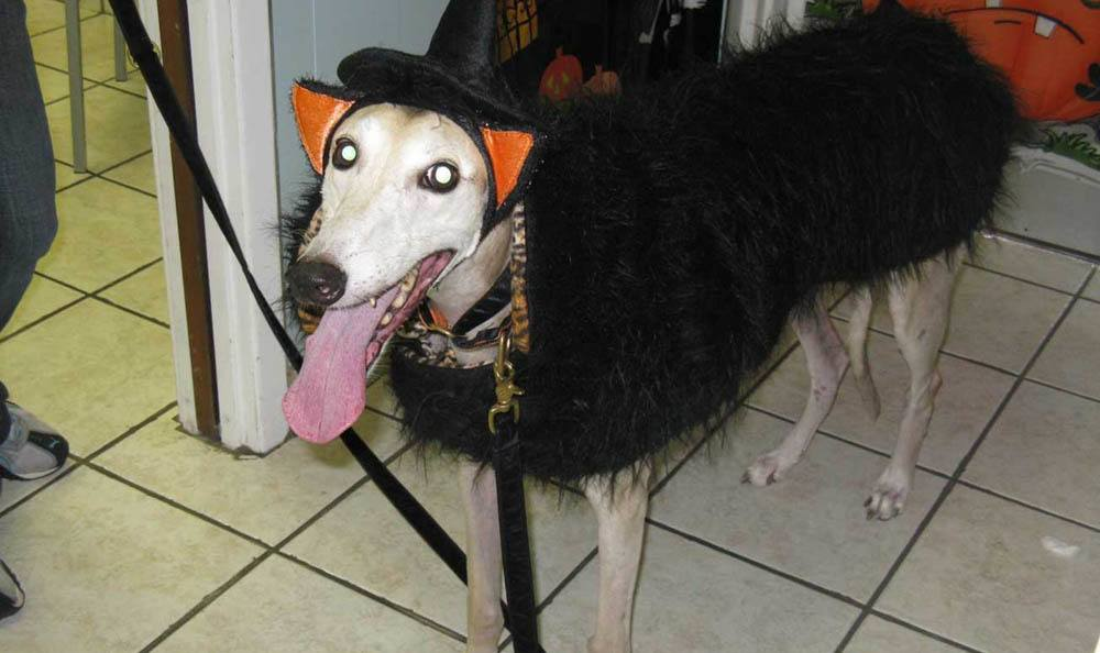 Dog In Halloween Costume At Friendswood Animal Clinic