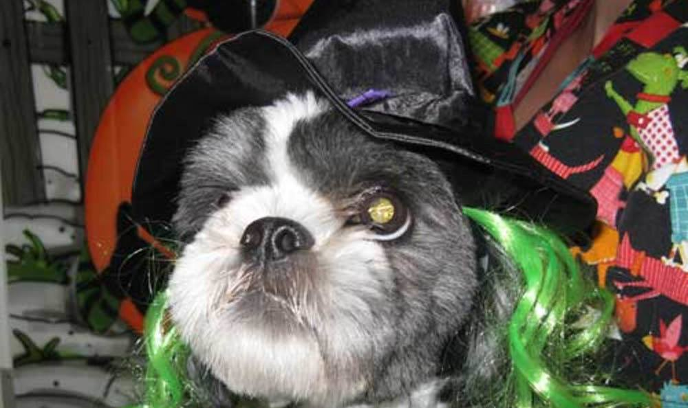 Dog Wearing Witch Hat At Friendswood Animal Clinic