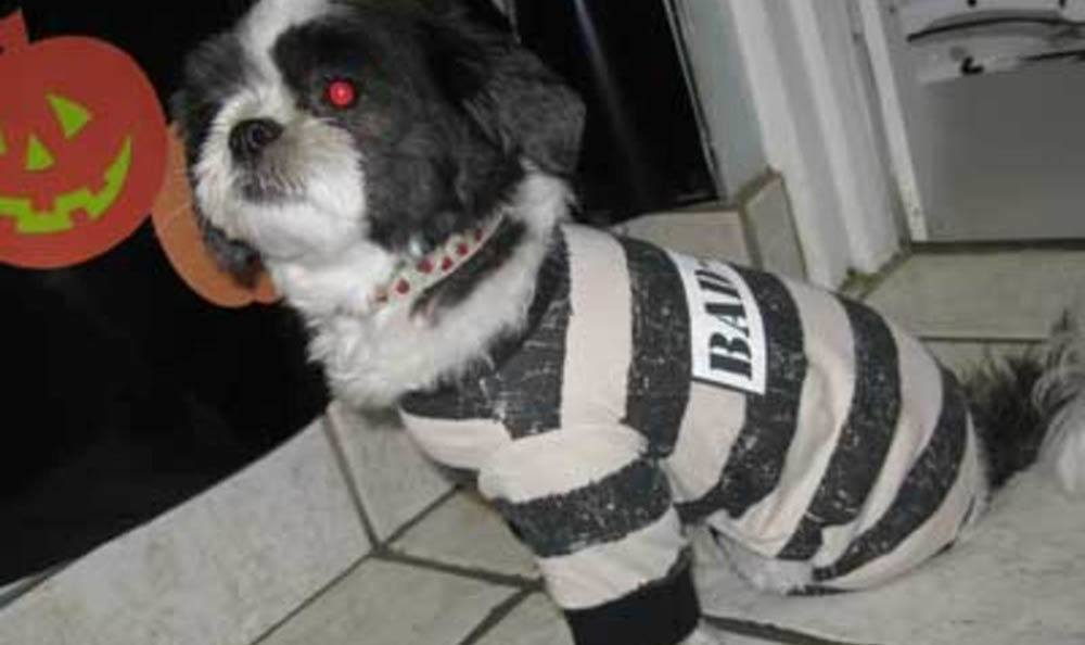 Doggy Inmate At Friendswood Animal Clinic In Friendswood