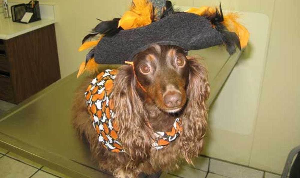 Little Dog Dressed Up As Witch At Friendswood Animal Clinic