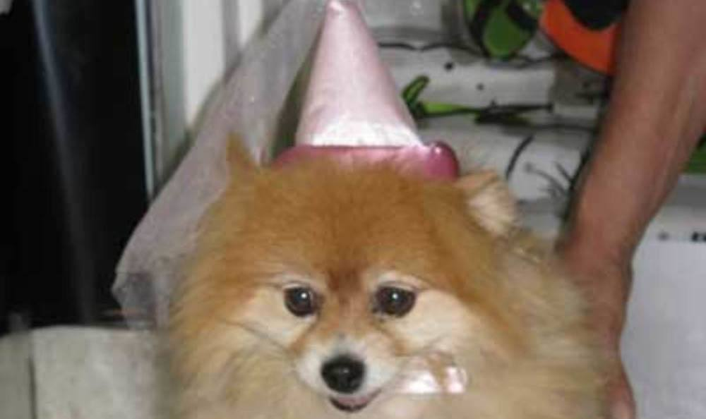 Little Dog In A Fairy Hat At Friendswood Animal Clinic In Friendswood