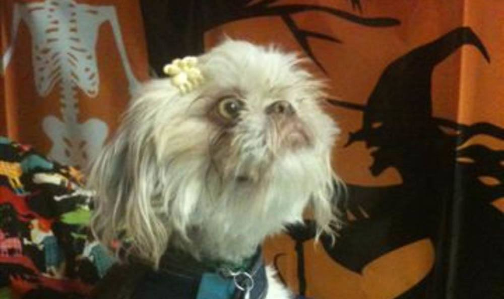 Little Dog With Hairclip At Friendswood Animal Clinic
