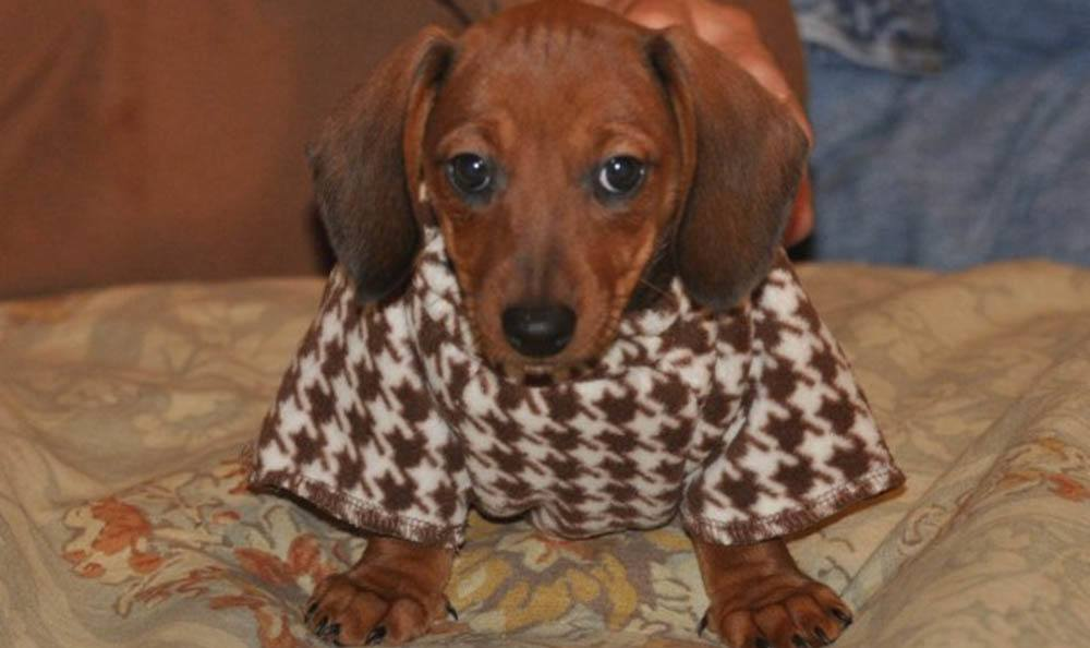 Puppy In A Sweater At Friendswood Animal Clinic In Friendswood