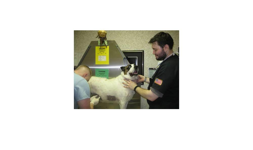 Al Being Treated At Camboro Veterinary Hospital
