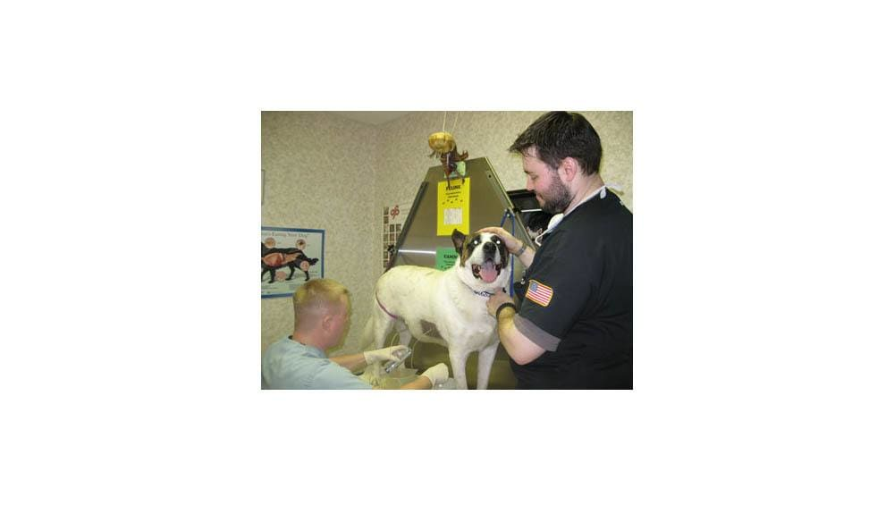 Al Getting Love From A Vet Tech At Camboro Veterinary Hospital