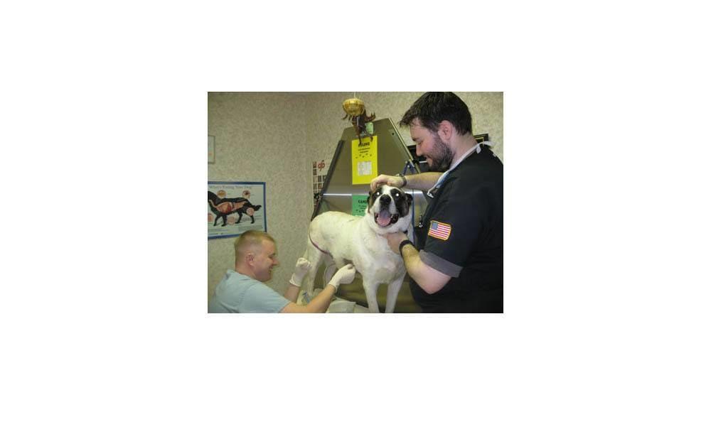 Finishing Up Als Procedure At Camboro Veterinary Hospital