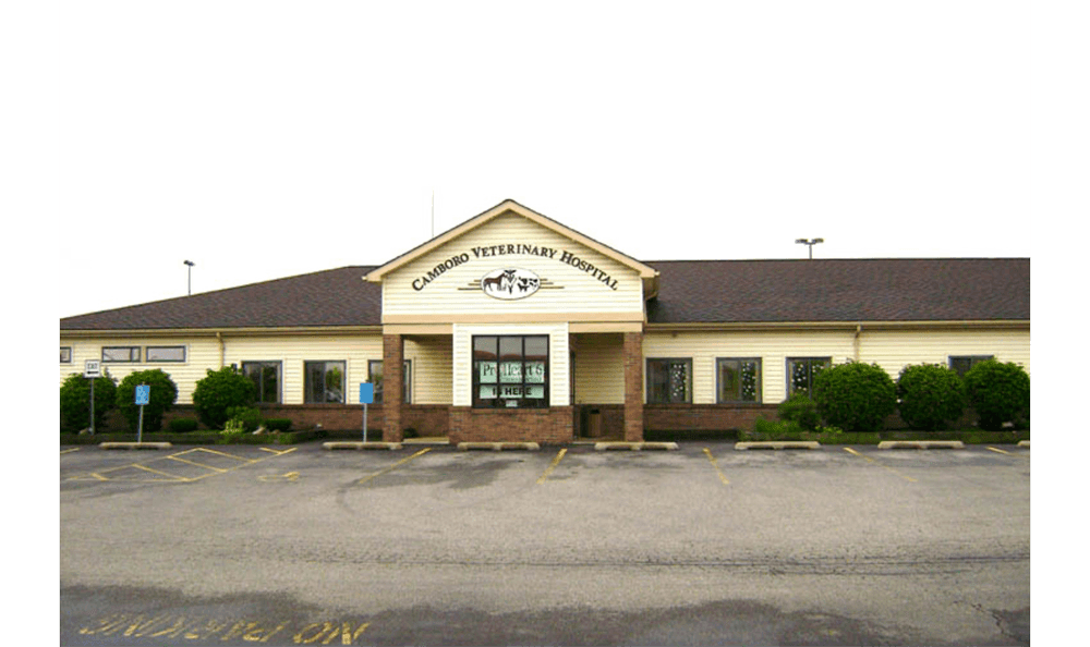 Camboro Veterinary Hospital 2011