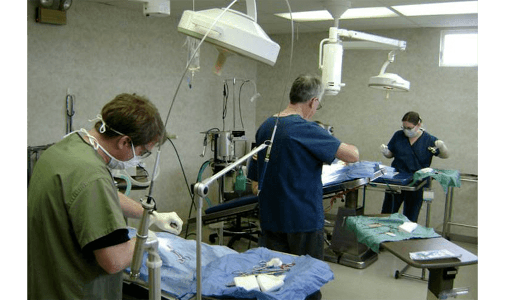 Doctors Working At Camboro Veterinary