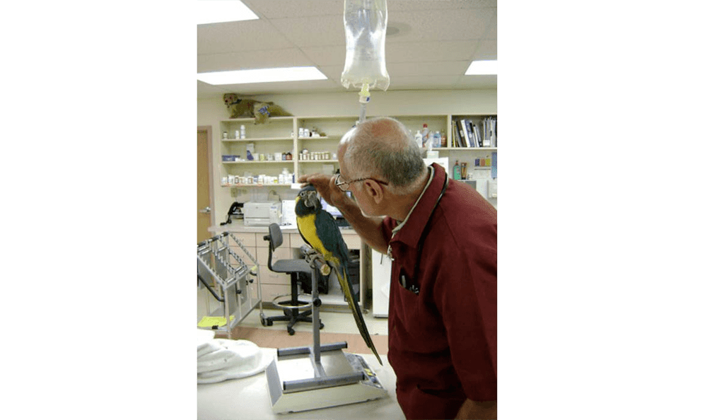 Parrot And Bird Veterinary Care