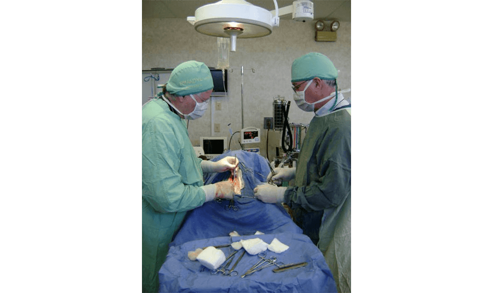 Veterinary Operation