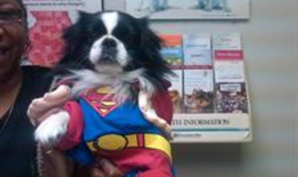 Superman Patches At Kruger Animal Hospital In Normal