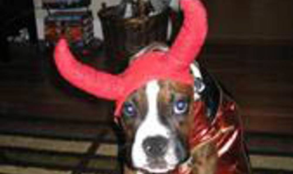 Tyson In Devil Horns At Kruger Animal Hospital