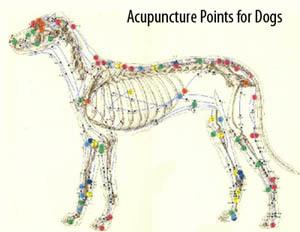 Acupuncture points for dogs at Lenoir Veterinary Hospital