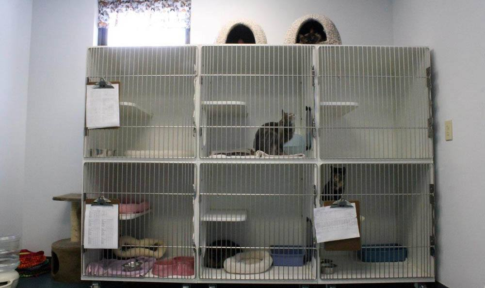 Cat Boarding Area At Lenoir Veterinary Hospital