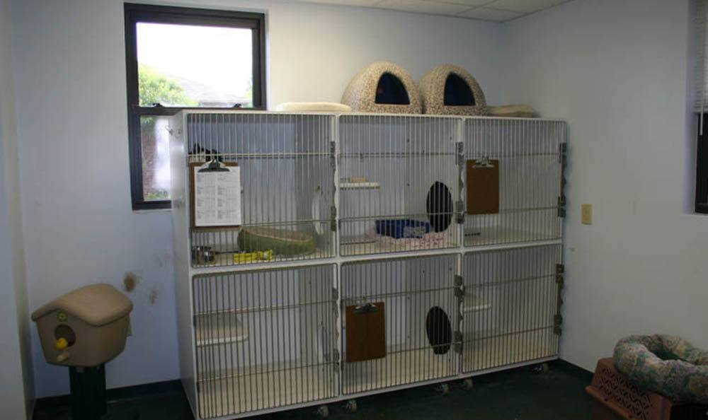 Cat Condos At Lenoir Veterinary Hospital