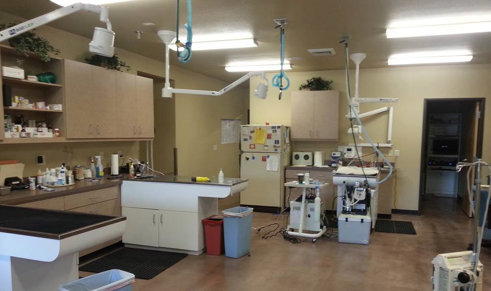 Large Exam Room At Hendricks Veterinary Hospital In Boise