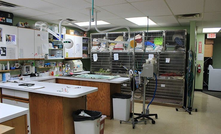 Operating room at All Creatures Animal Hospital