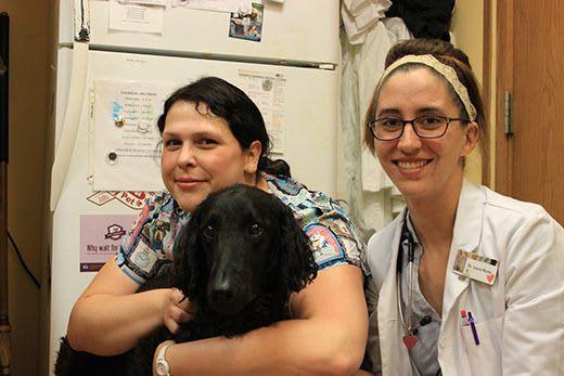 Friendly hugs at City Creatures Animal Hospital
