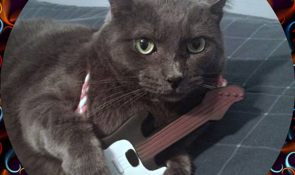 Rock out with your cat out!