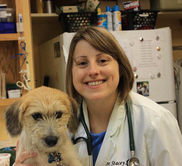 Stacy sood, DVM at Buffalo Animal Hospital