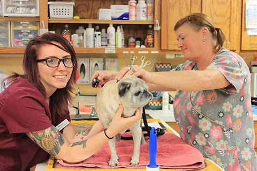 Teamwork values at City Creatures Animal Hospital
