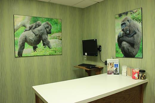 Private room at City Creatures Animal Hospital