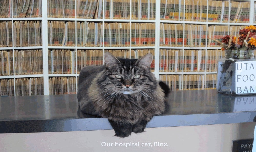 Binx at East Valley Veterinary Clinic in Salt Lake City