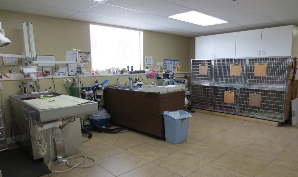 Surgery Room at East Valley Veterinary Clinic in Salt Lake City