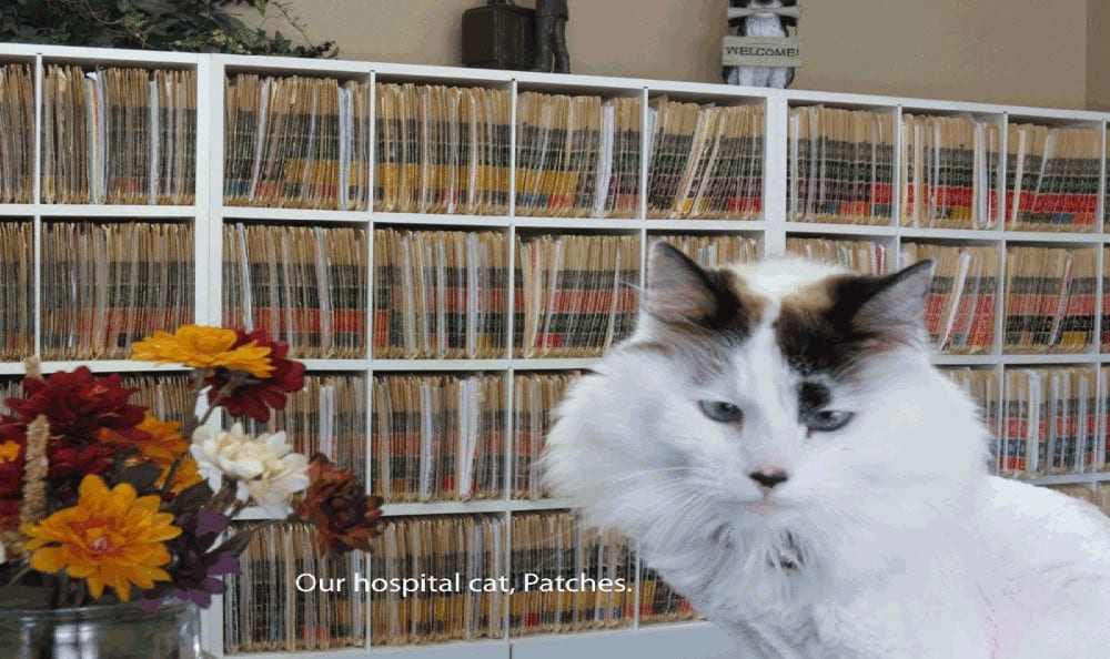 Patches at East Valley Veterinary Clinic in Salt Lake City