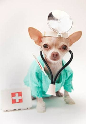Puppy dressed as a doctor at Red Mountain Animal Hospital in Mesa, Arizona