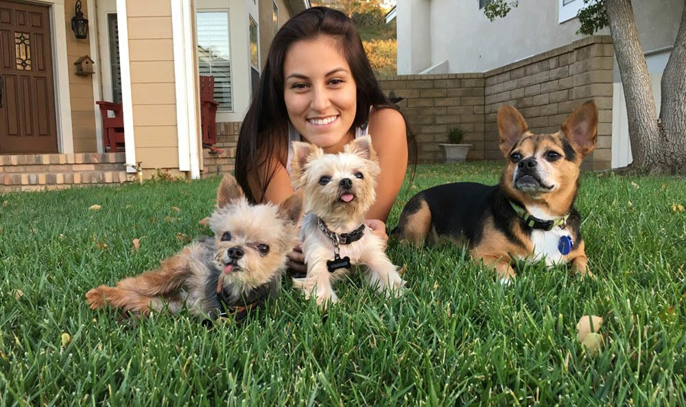 Three Little Dogs In Green Grass At Central Coast Pet Emergency Clinic