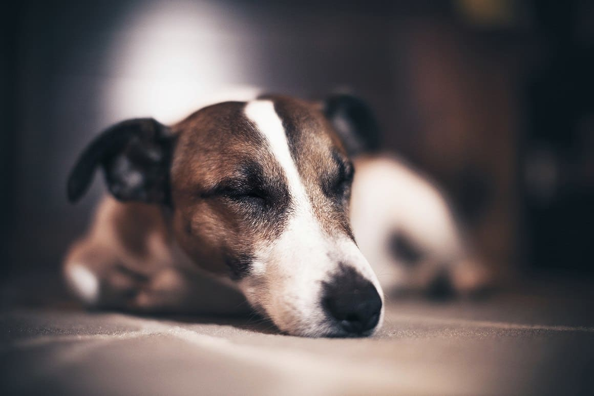 Treatment for your boarded pets at Madison Animal Hospital