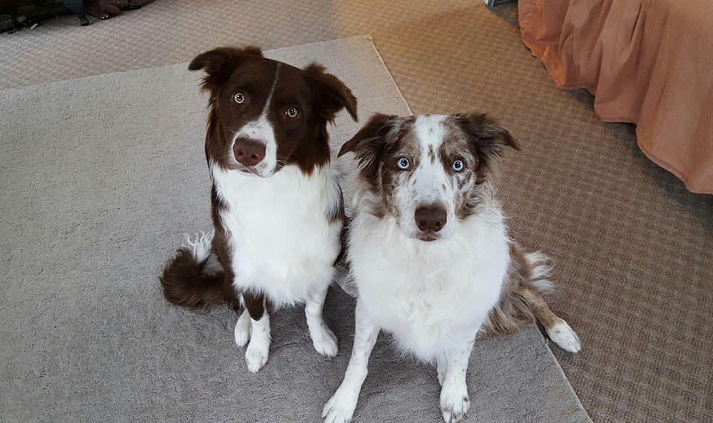 Brodie And Cooper