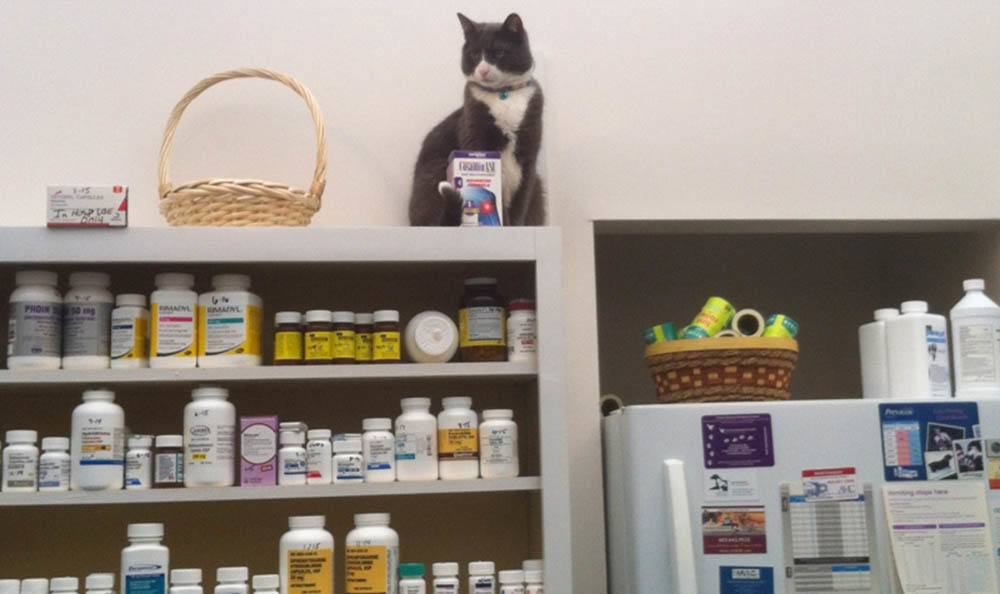 Nigel In The Pharmacy At Merrimack Veterinary Hospital