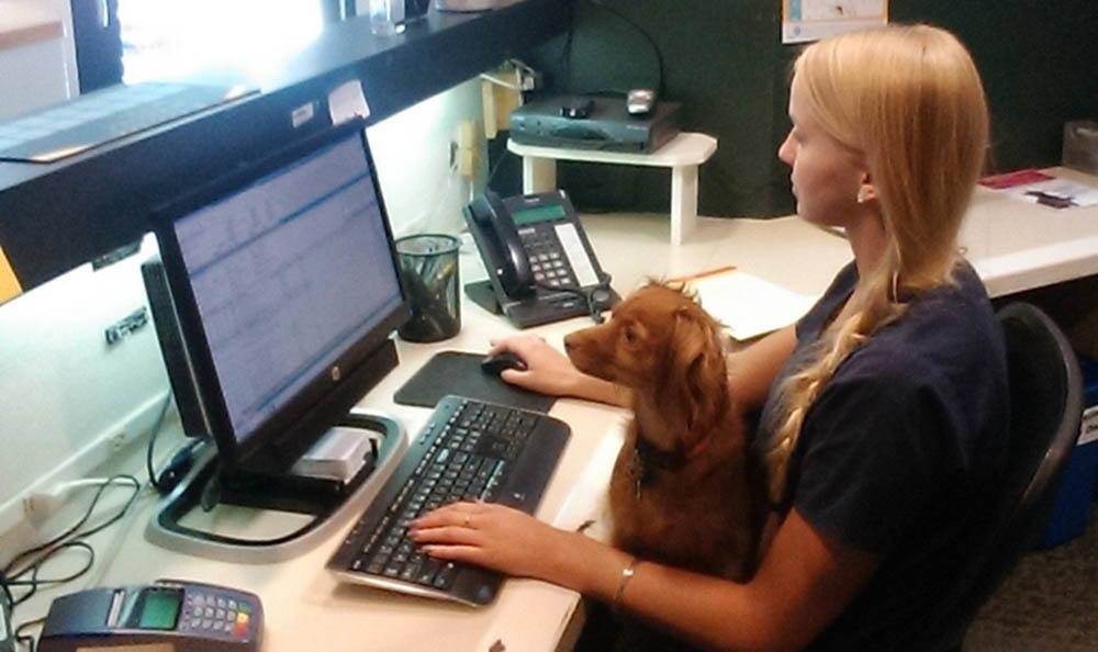 Receptionist Rachel At Merrimack Veterinary Hospital