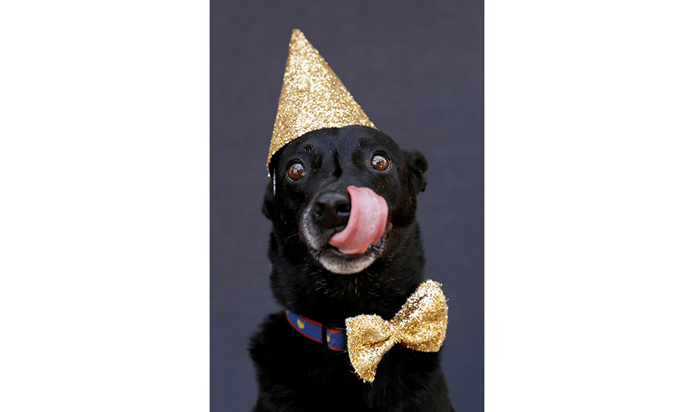 Hank the dog with a party hat in Tampa
